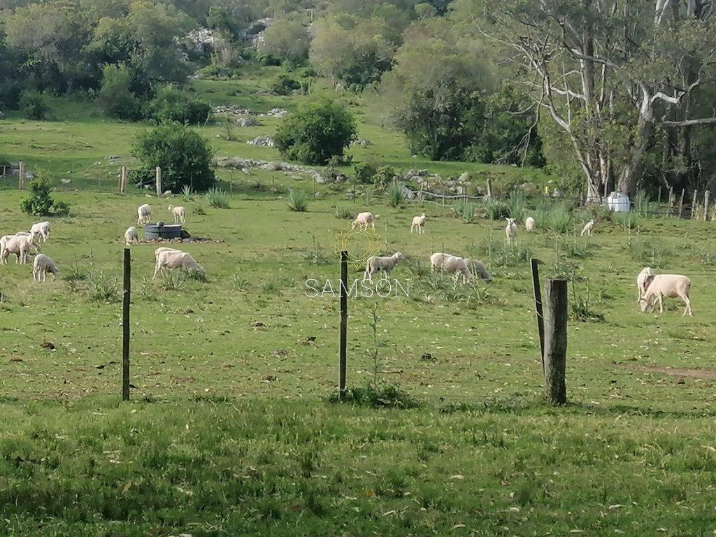 Campo Ref.64111 - Campo en venta 28 hás. Paraje Salamanca.