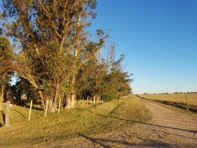 campo en durazno - rou117p