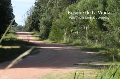 Terreno en Venta en  Rocha, zona de Punta del Diablo, Bosque de La viuda