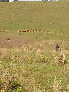 muy buen campo de 90 hectáreas en lavalleja - ccp30777p