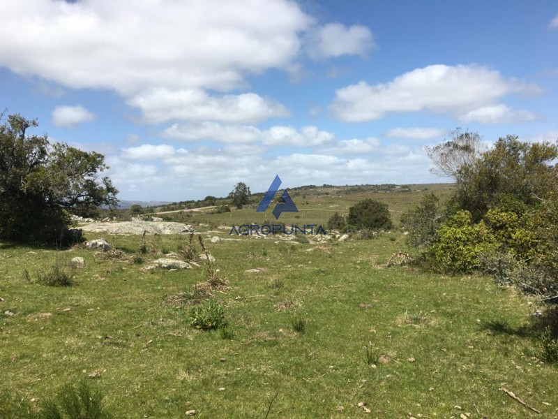 Chacra 5 hectáreas * Ruta 39