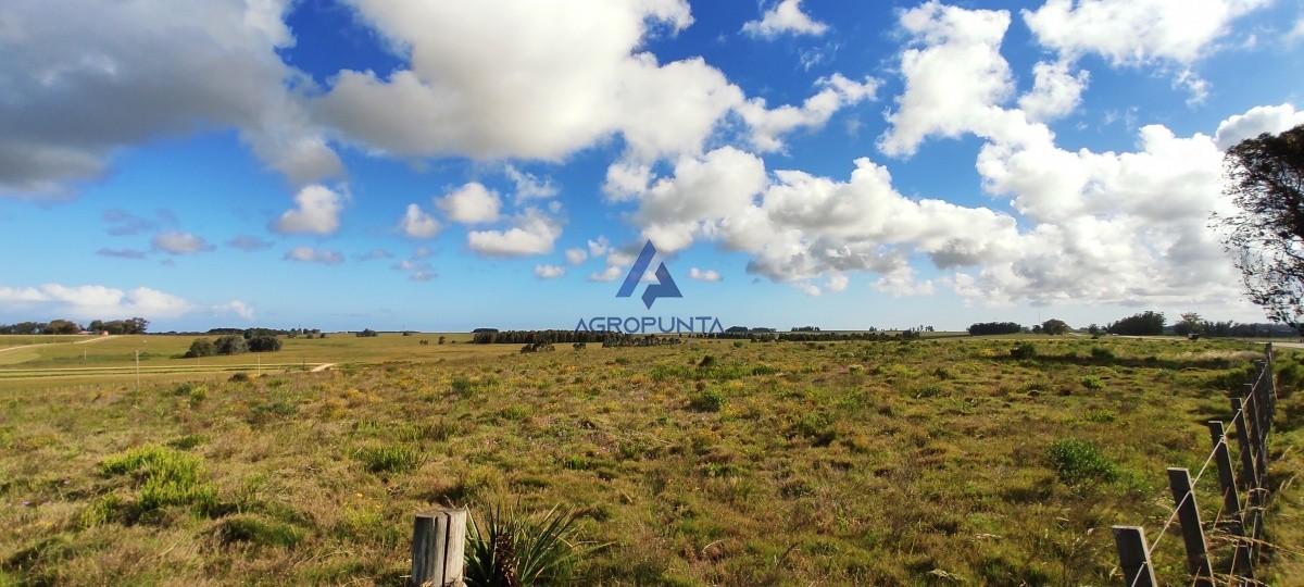 Campo en Maldonado,  | AgroPunta Inmobiliaria Ref:5409