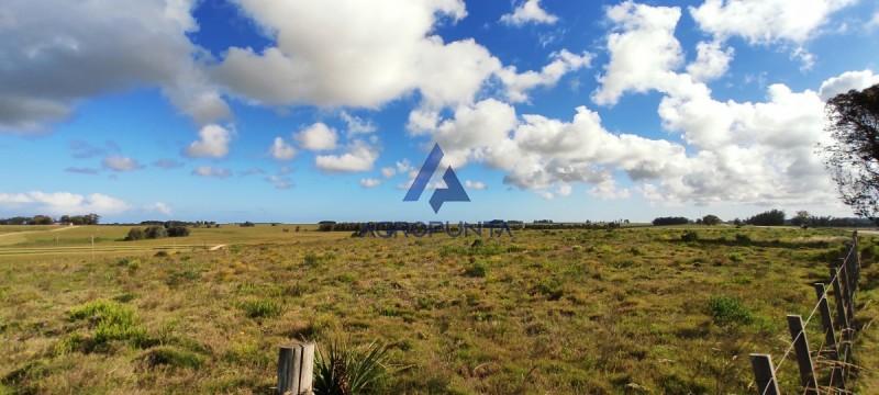 Campo en ,  | AgroPunta Inmobiliaria Ref:5409
